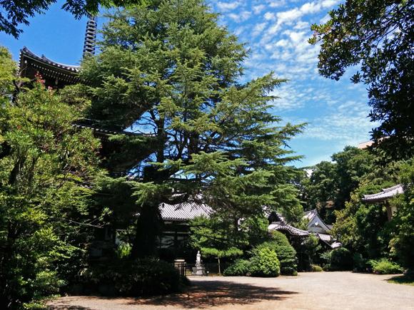 20170714_047 東禪寺