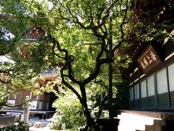 20170714_046 東禪寺