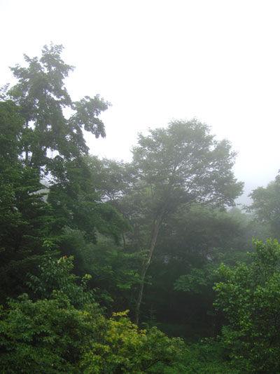 20110731-1.jpg