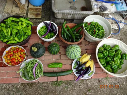 2017年 夏野菜です!