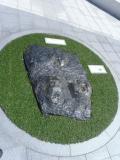 JR福井駅 恐竜足跡の化石2