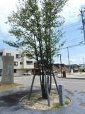 JR宇野気駅 かほく「中央ライオンズクラブCN25周年記念植樹 木