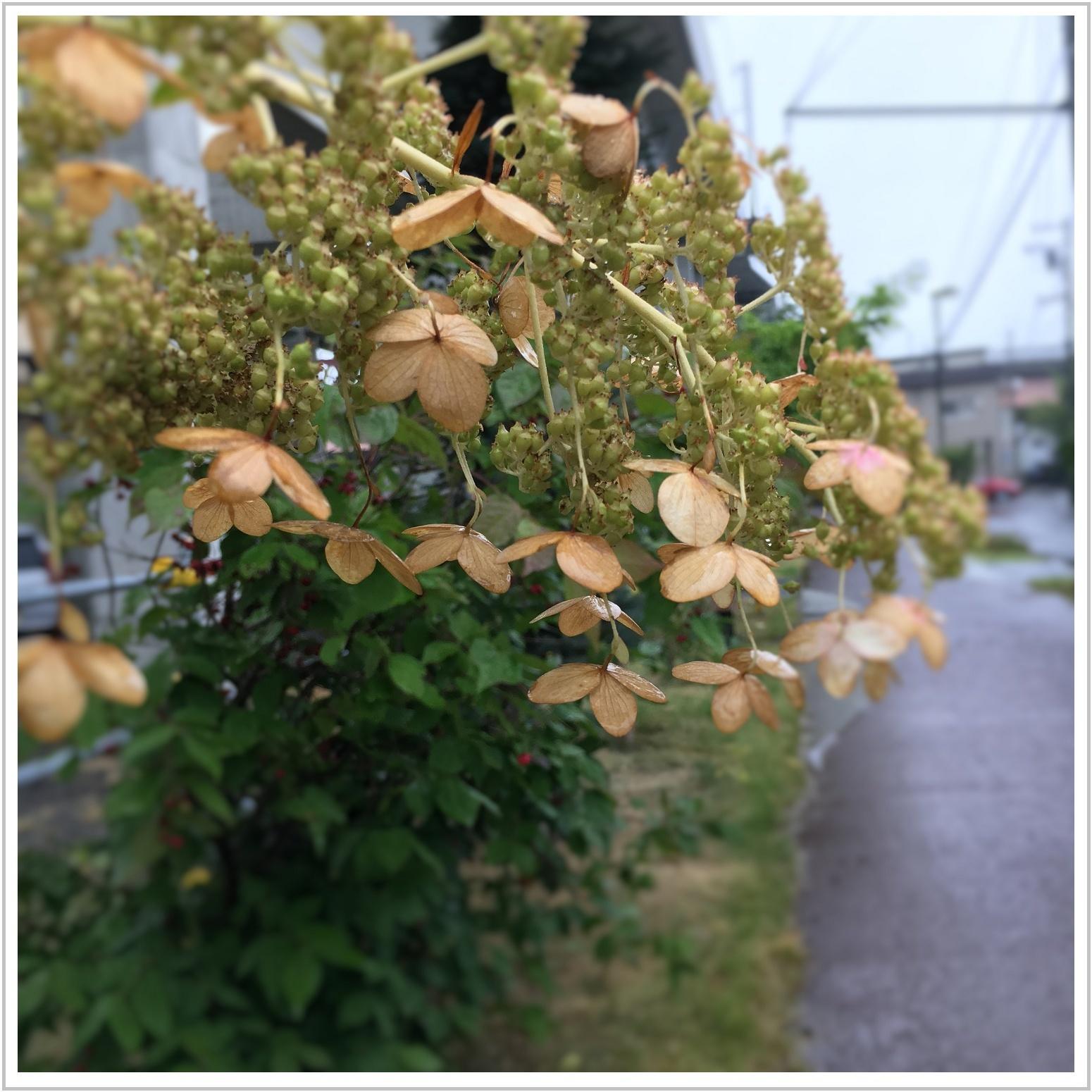 autumn_2_913.jpg