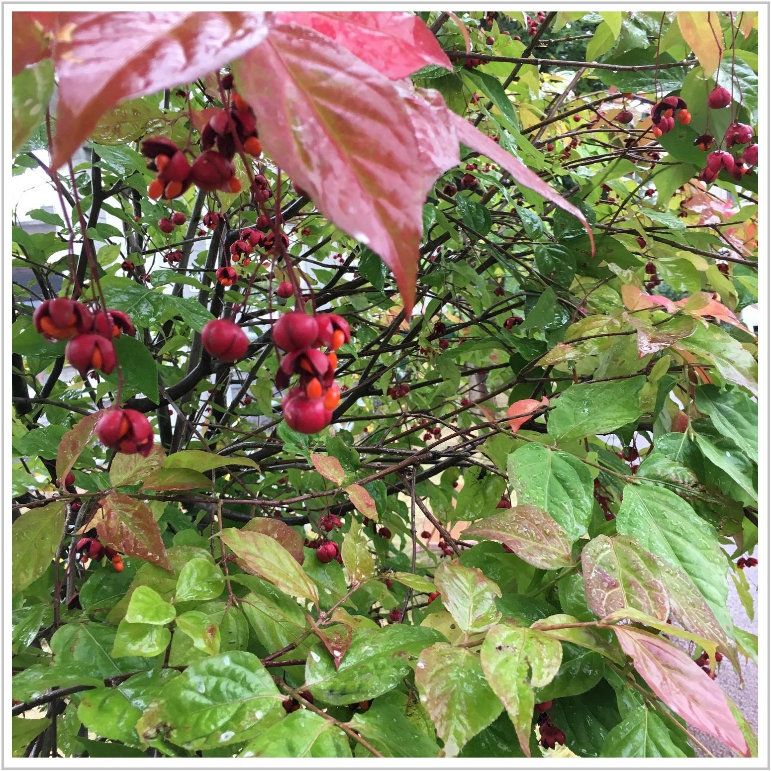 autumn_3_913.jpg