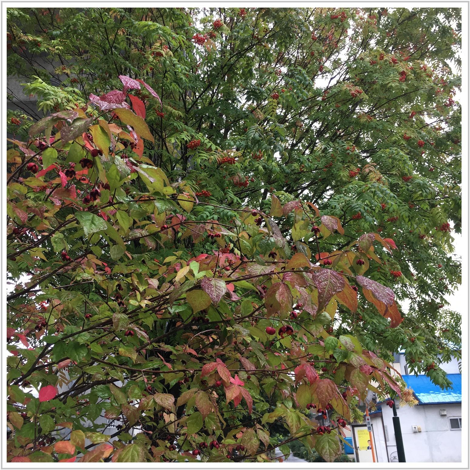 autumn_4_913.jpg