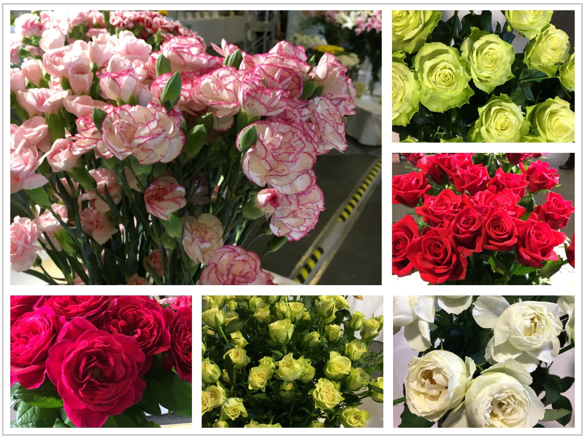 rose_1_830.jpg