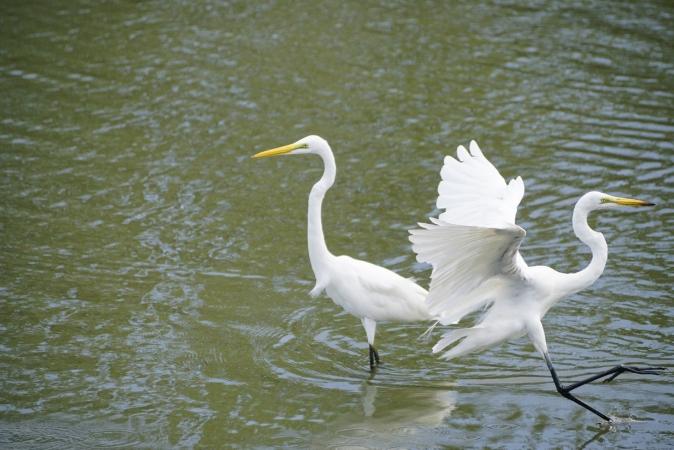 DSC00806野鳥公園