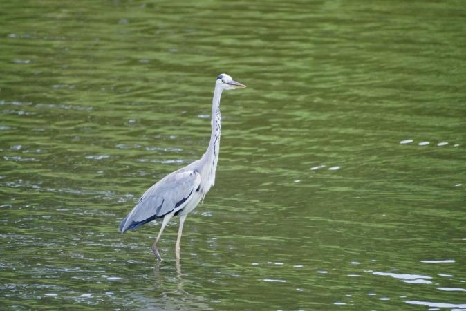 DSC00864野鳥公園