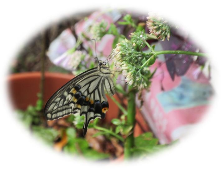 お休みの蝶