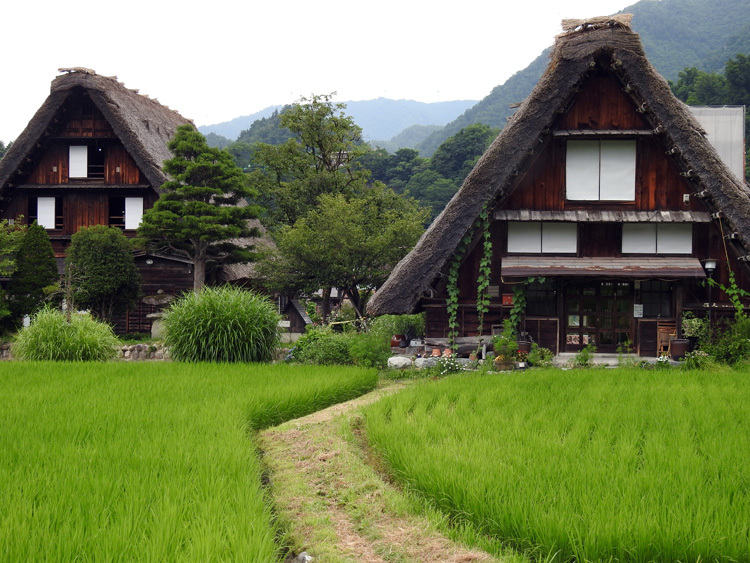 今年の夏休みは自然いっぱいの白川郷へ 5