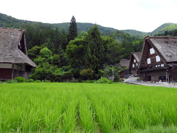 今年の夏休みは自然いっぱいの白川郷へ 8