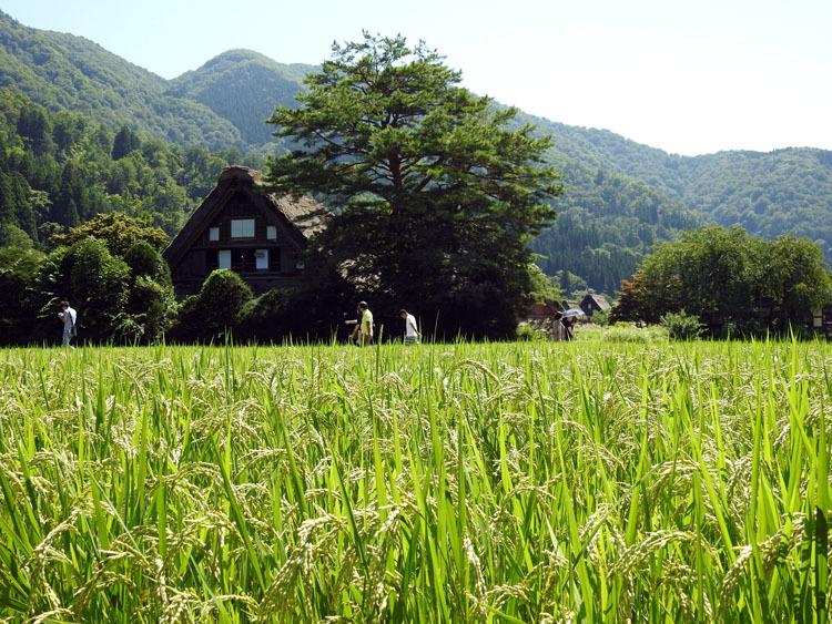 夏休みのピークが去って少し落ち着いたこの時期に白川郷へ6