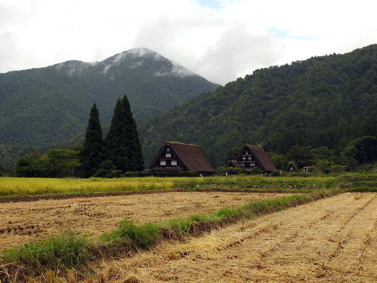白川郷では稲刈りなどの風景が見受けられる季節です2