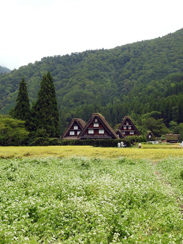 白川郷では稲刈りなどの風景が見受けられる季節です3