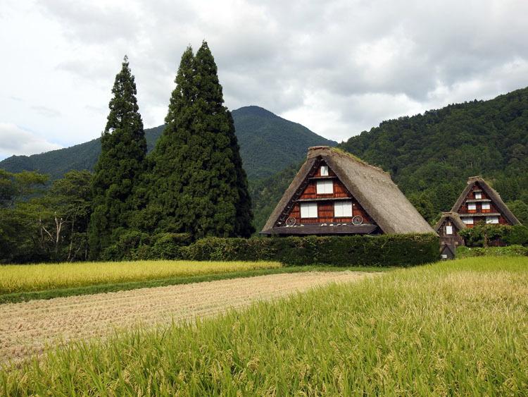 白川郷では稲刈りなどの風景が見受けられる季節です4