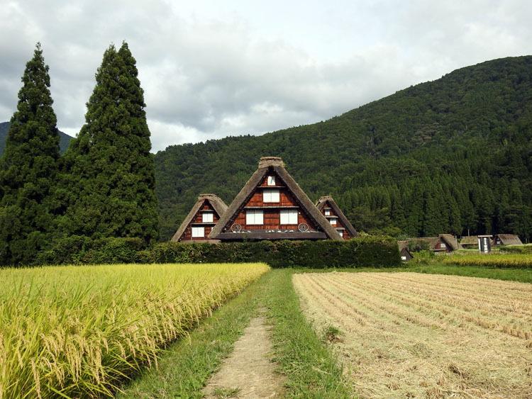 白川郷では稲刈りなどの風景が見受けられる季節です5