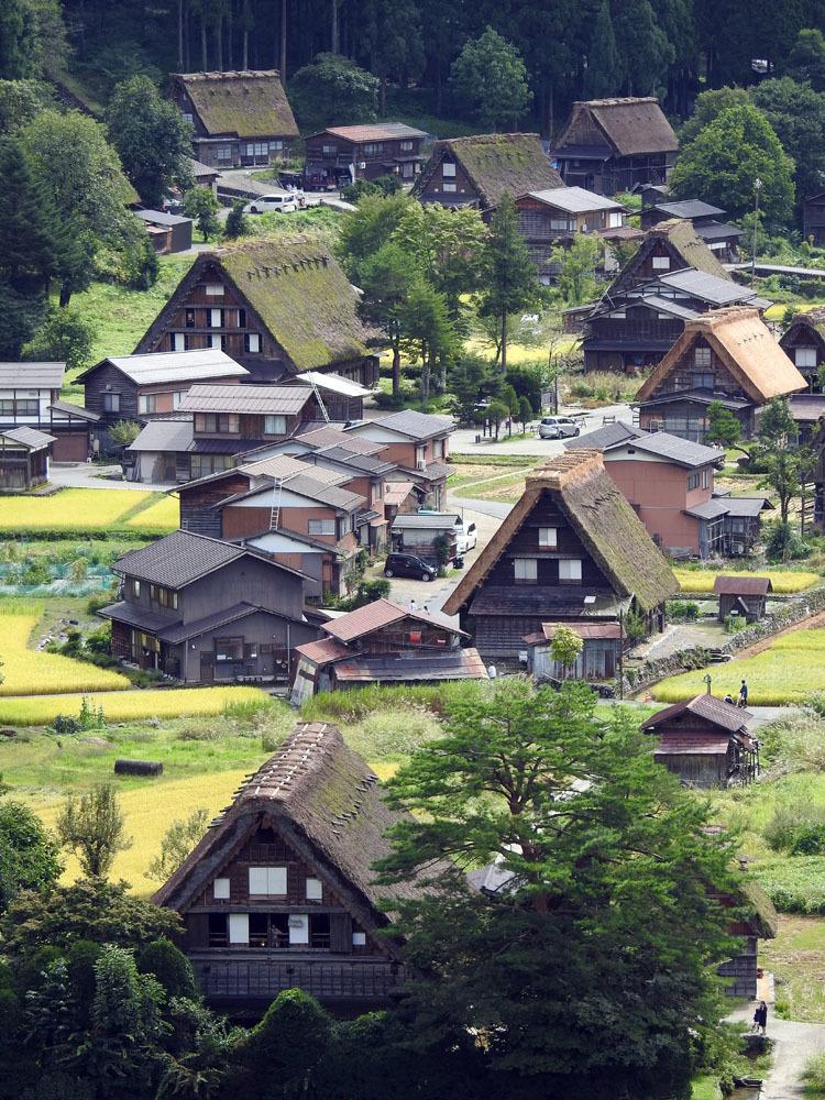 白川郷では稲刈りなどの風景が見受けられる季節です6