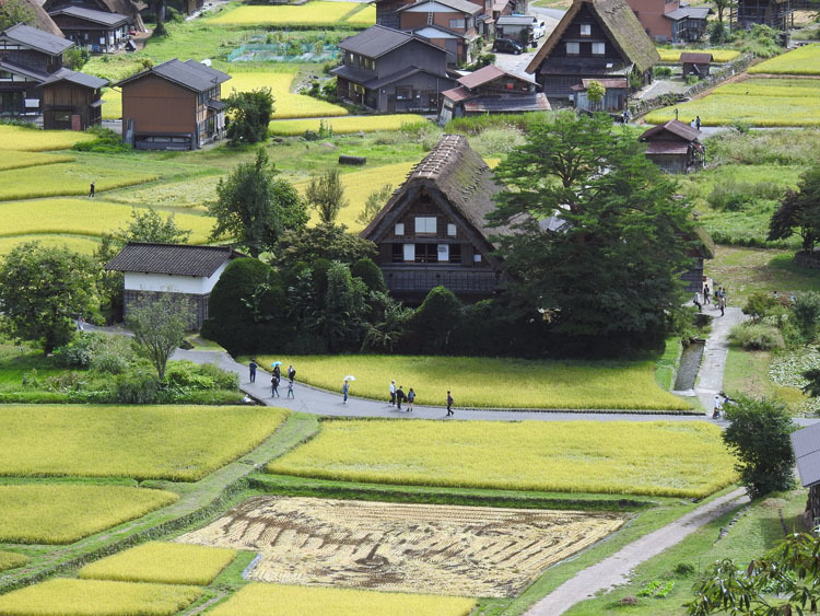 白川郷では稲刈りなどの風景が見受けられる季節です7