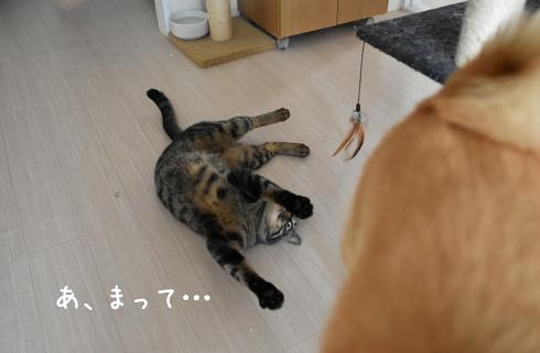 ☆DSC_0314 (1E)thum