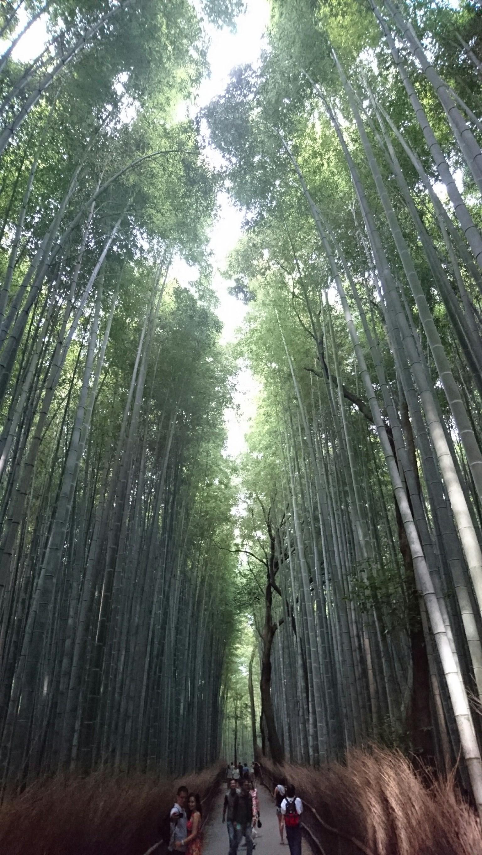 迷いの竹林