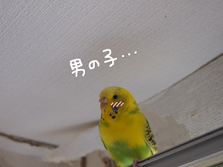 kobuta7-2.jpg