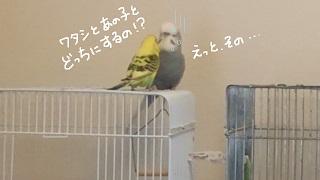 love7-2.jpg