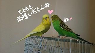 love9-2.jpg