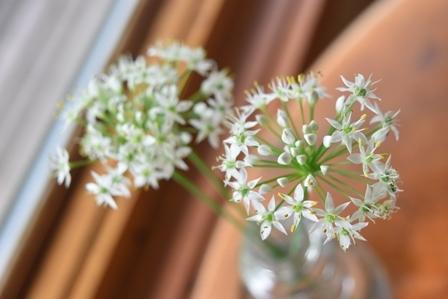 畑の白いお花