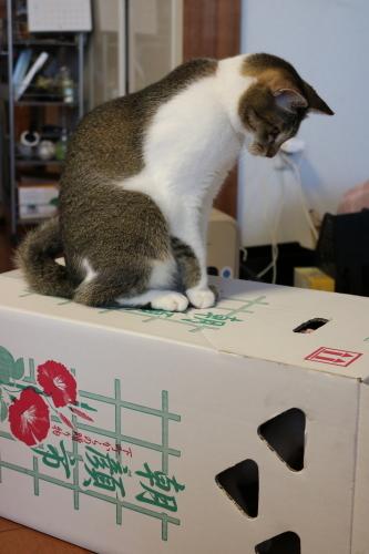 箱の上のナッツ