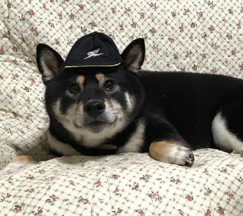 野球帽 マロ