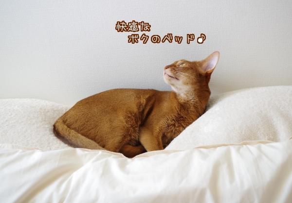 快適なボクのベッド♪