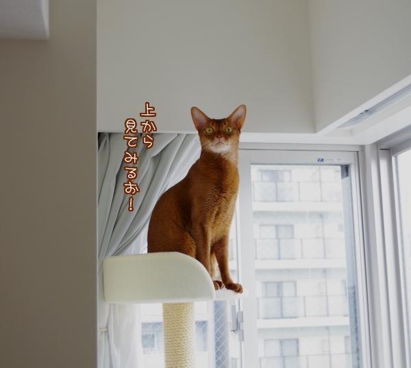 上から見てみるお!