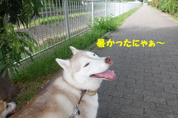 170713 散歩05
