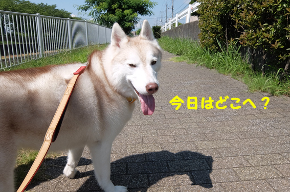 170721 散歩05