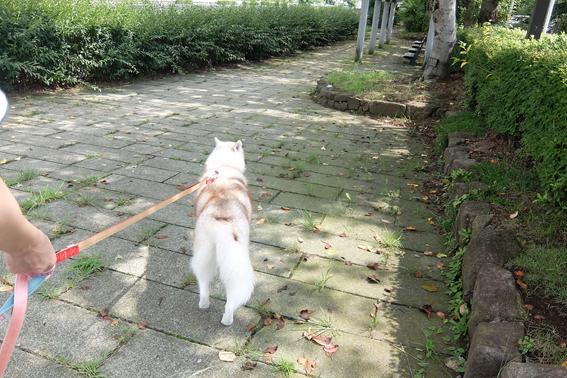 170819 散歩01