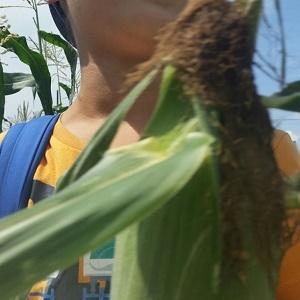 親子農業体験