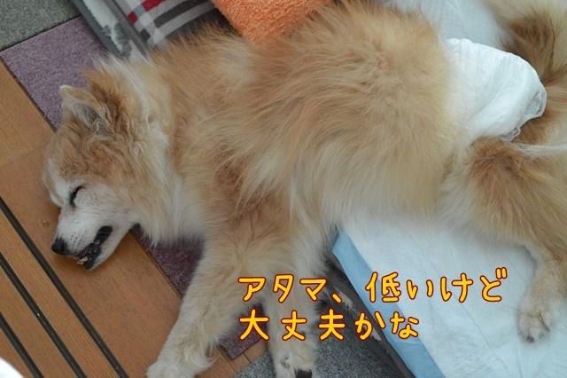 b-DSC_6357.jpg