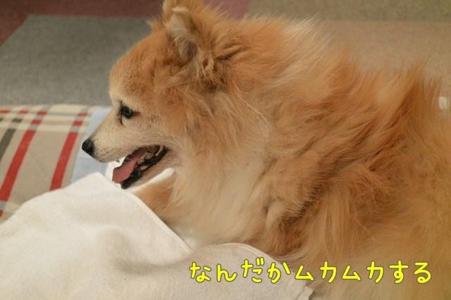b-DSC_7451.jpg