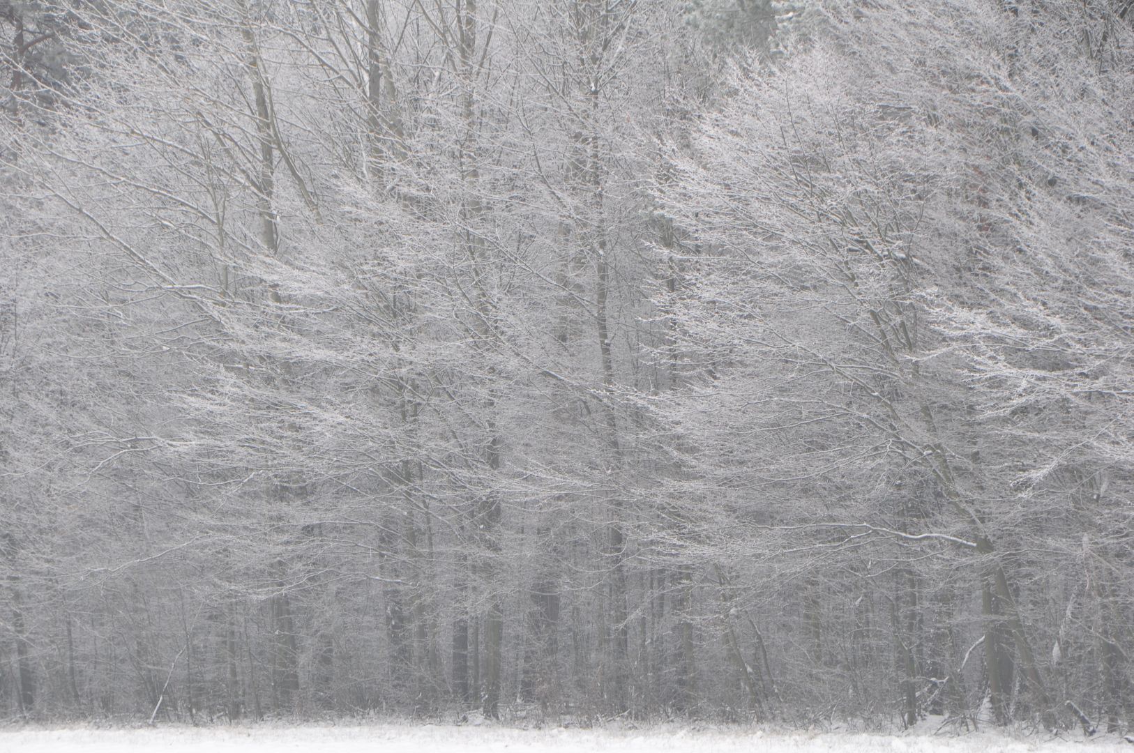 white scene