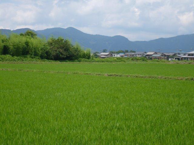 青田(140705湖北)P1110161