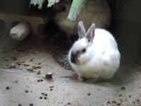 DSCN9903ウサギ