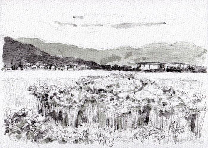 彼岸花の咲く風景 グリザイユ (700x500)