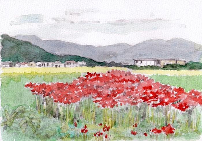 彼岸花の咲く風景 (700x489)