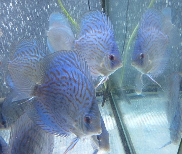 新Bi JWS若魚3