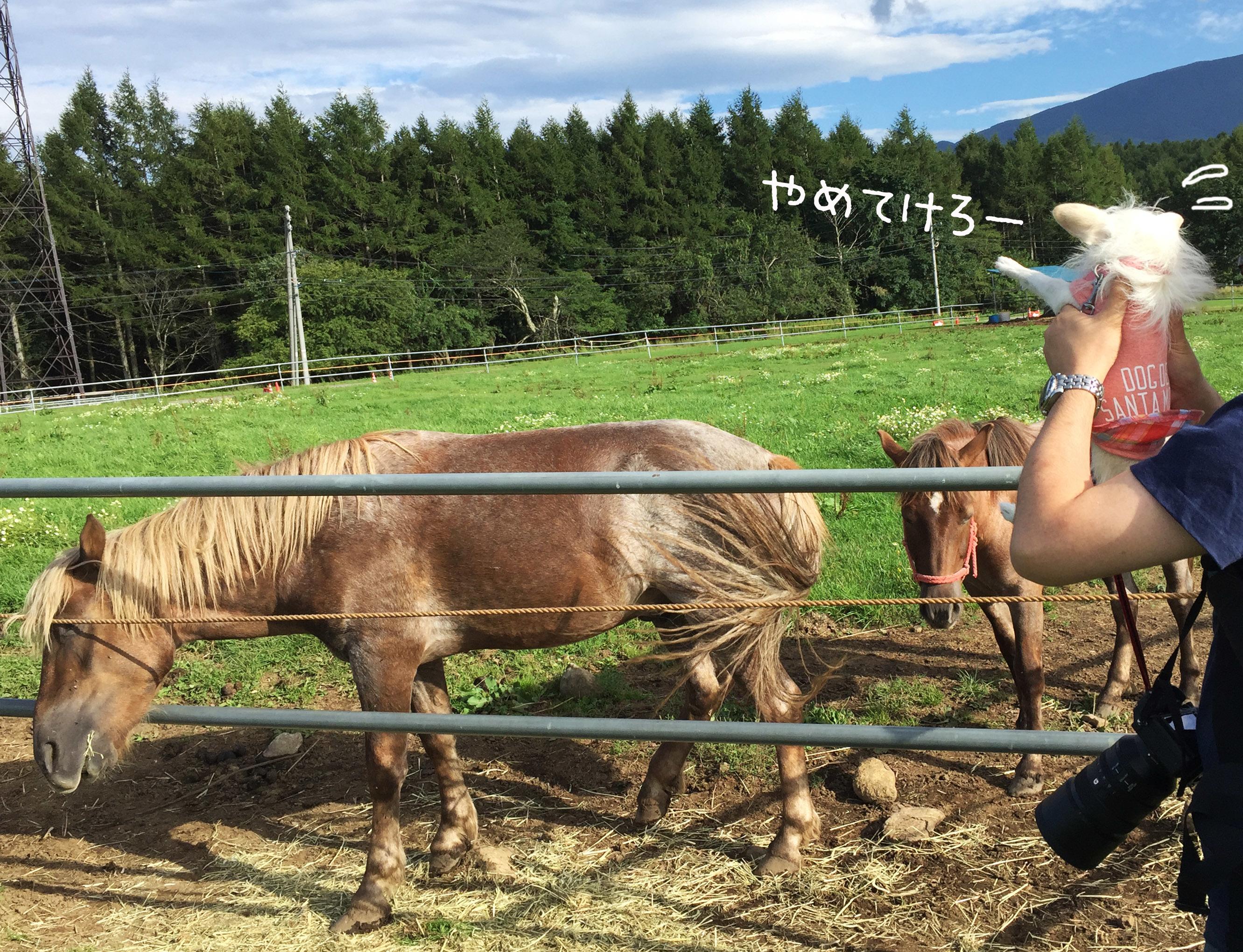 1708お馬さんと02