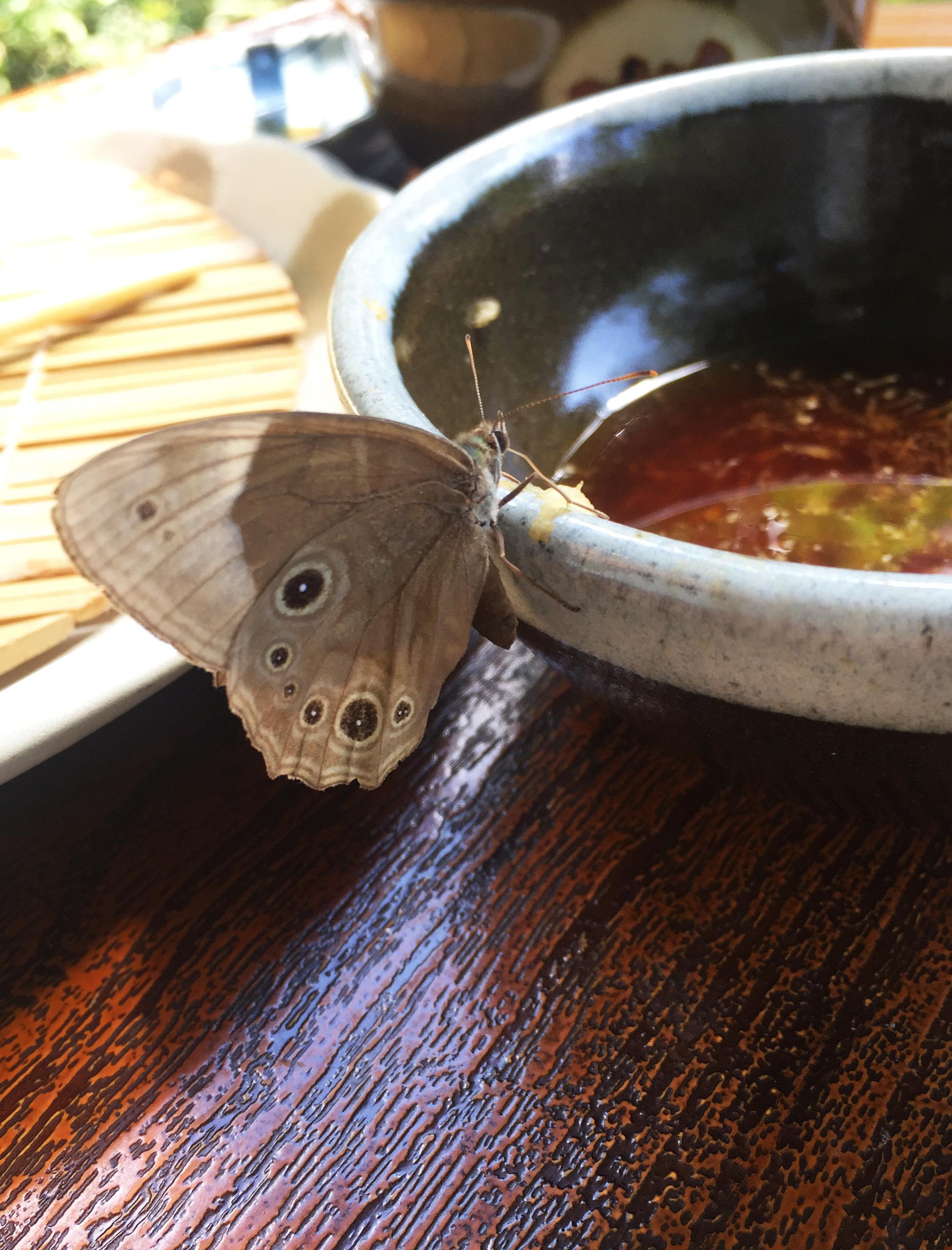 1708そばつゆ好きな蝶々