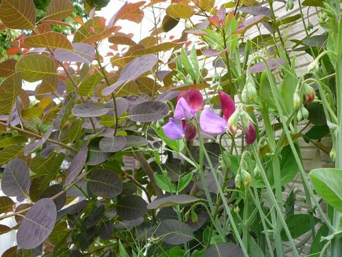 【種プレ】秋まき種子