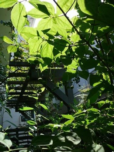 静けさ漂う南の庭
