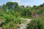 モネの庭11
