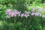 モネの庭12